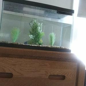10 gallon fishtank